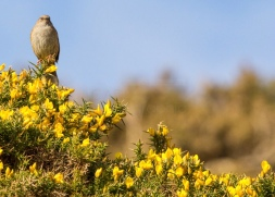 Bird on Bracken image taken in April