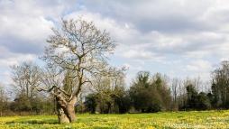 The Ha-Ha Tree at Warley Place