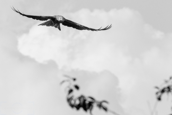 Black and White Wednesday's: Kite in Flight