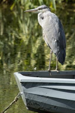 Heron Original Image