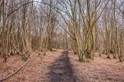 Woodland HDR Image