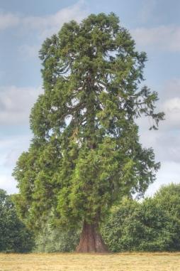 Singular Tree 2