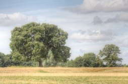 Two Singular Trees