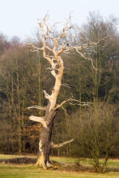 unseen-2016-skeleton-tree